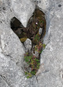 Burren Heart Website