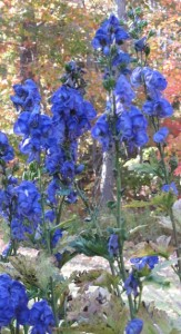 Website Delphinium