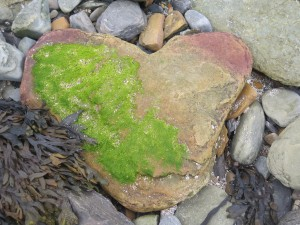 Touch: Heart Moss (Brough of Birsay)